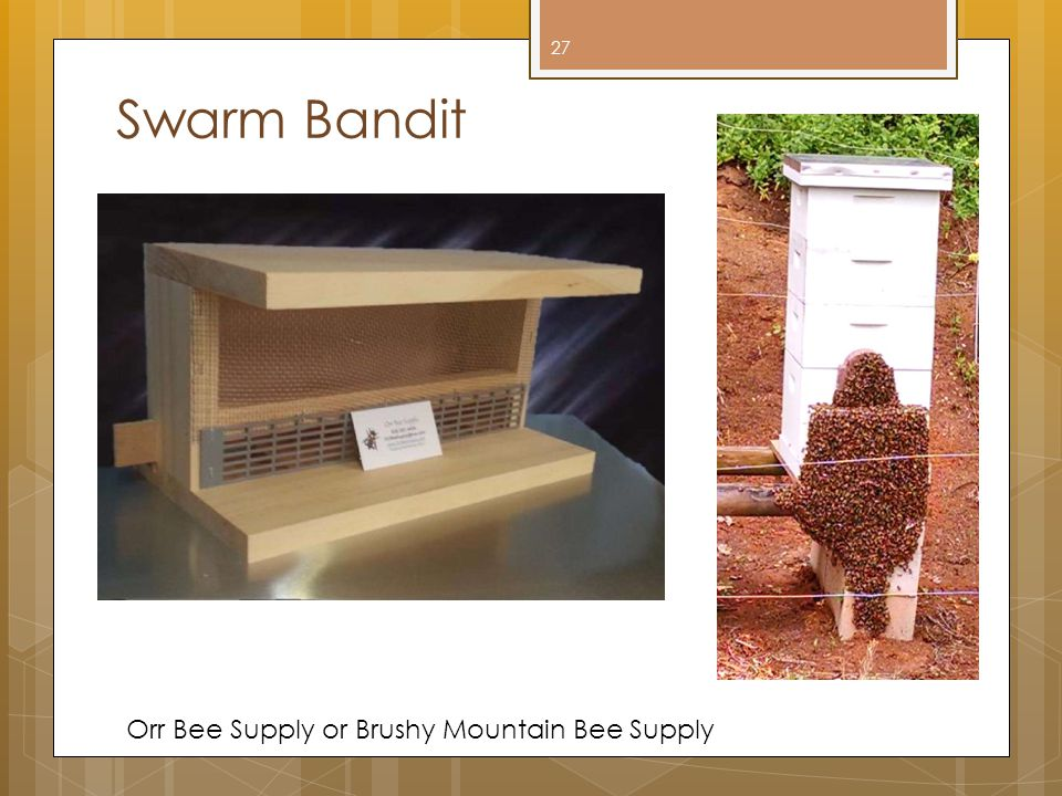Swarm Bandit Orr Bee Supply or Brushy Mountain Bee Supply