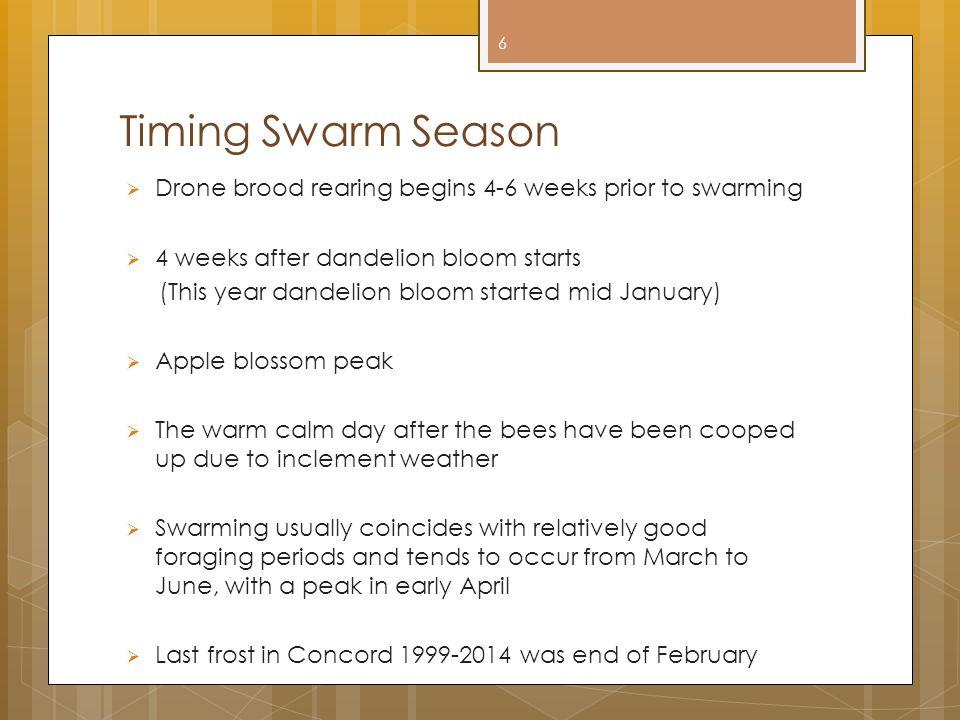 Timing Swarm Season Drone brood rearing begins 4-6 weeks prior to swarming. 4 weeks after dandelion bloom starts.