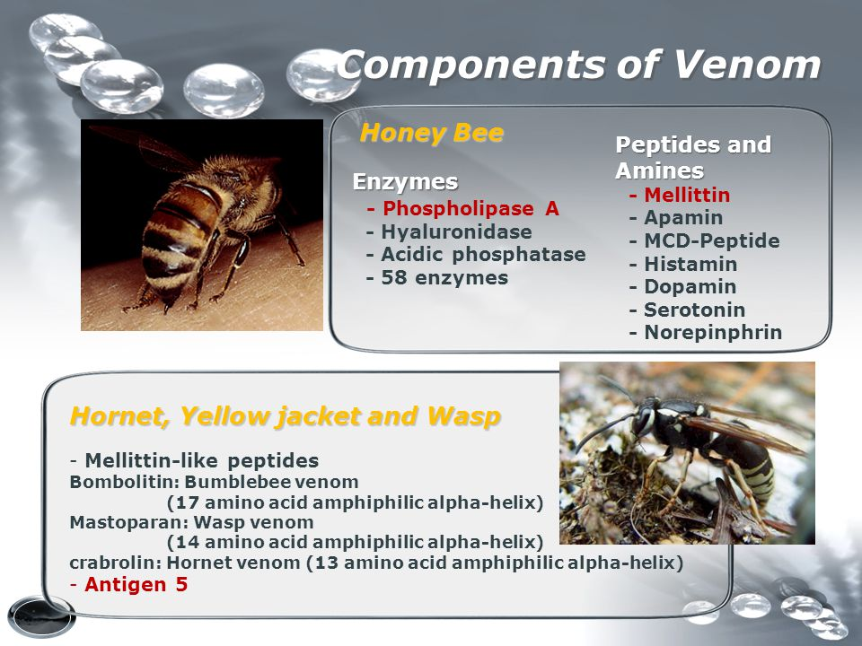 Components of Venom Honey Bee Hornet, Yellow jacket and Wasp