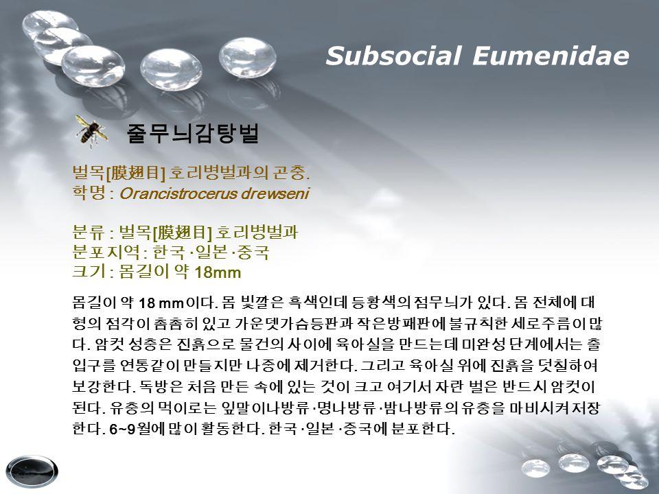 Subsocial Eumenidae 줄무늬감탕벌