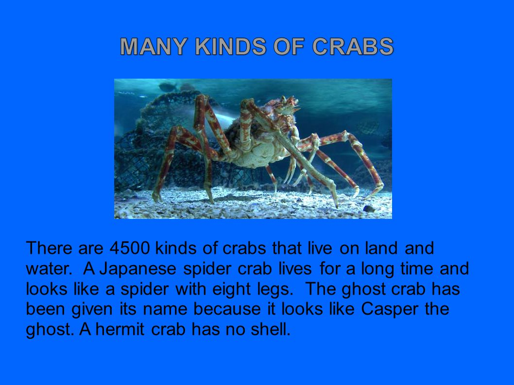 MANY KINDS OF CRABS
