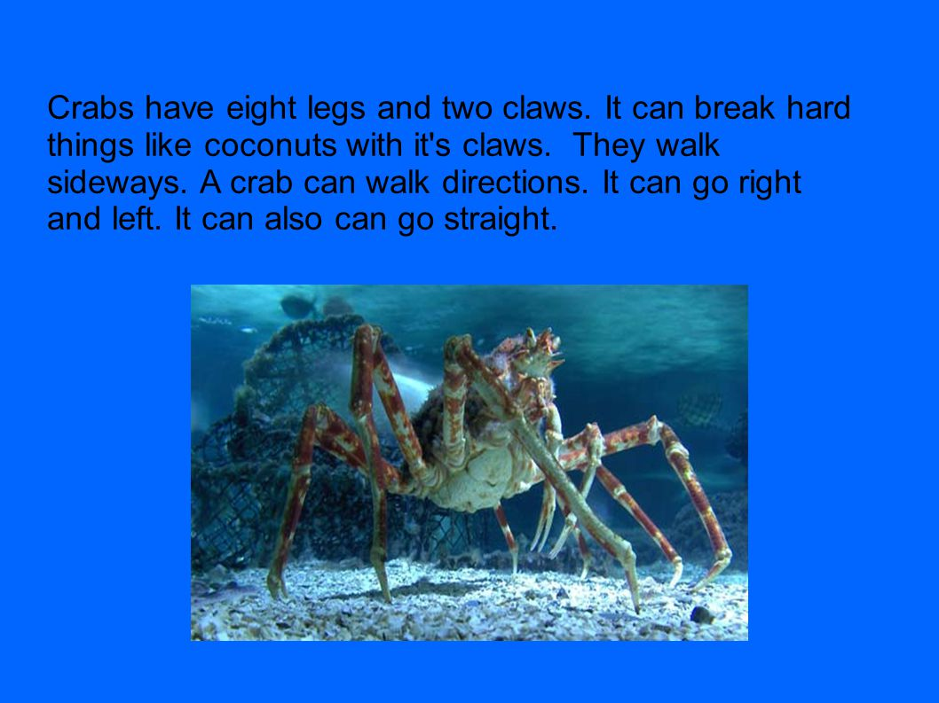 Crabs have eight legs and two claws