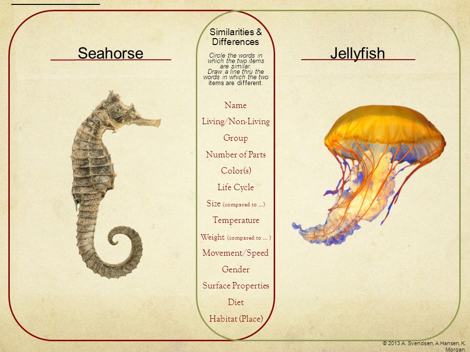 Seahorse Jellyfish Similarities & Differences Name Living/Non-Living