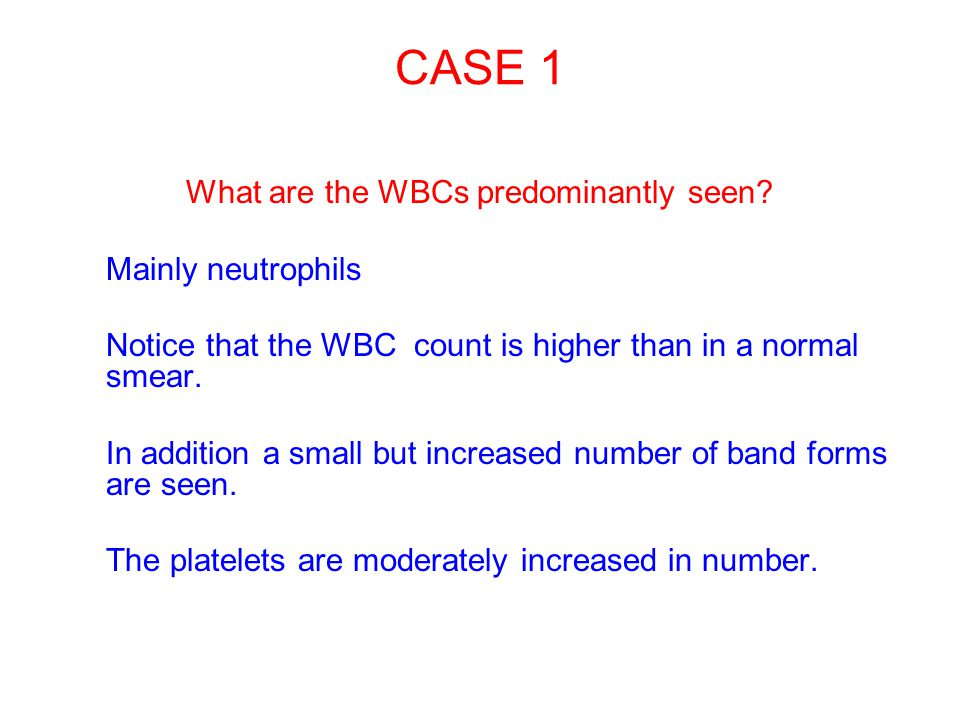 What are the WBCs predominantly seen