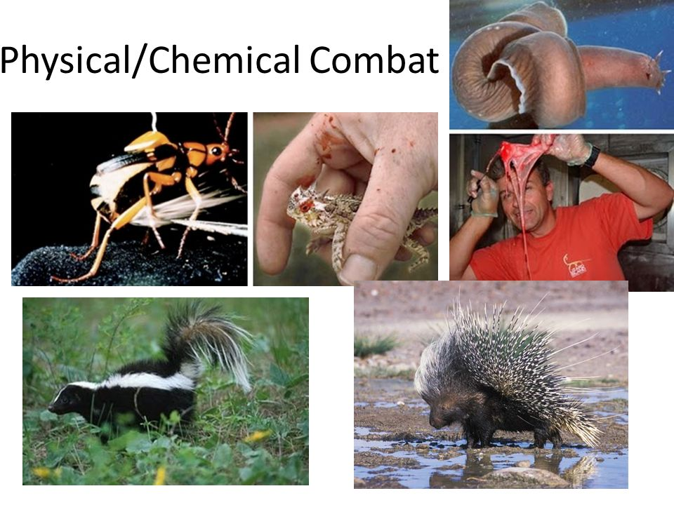 Physical/Chemical Combat