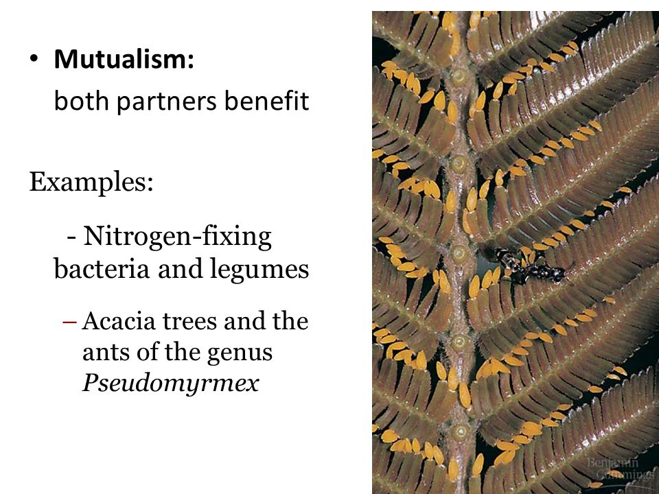 Mutualism: both partners benefit Examples:
