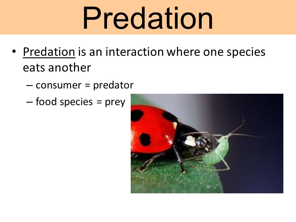Predation Predation is an interaction where one species eats another