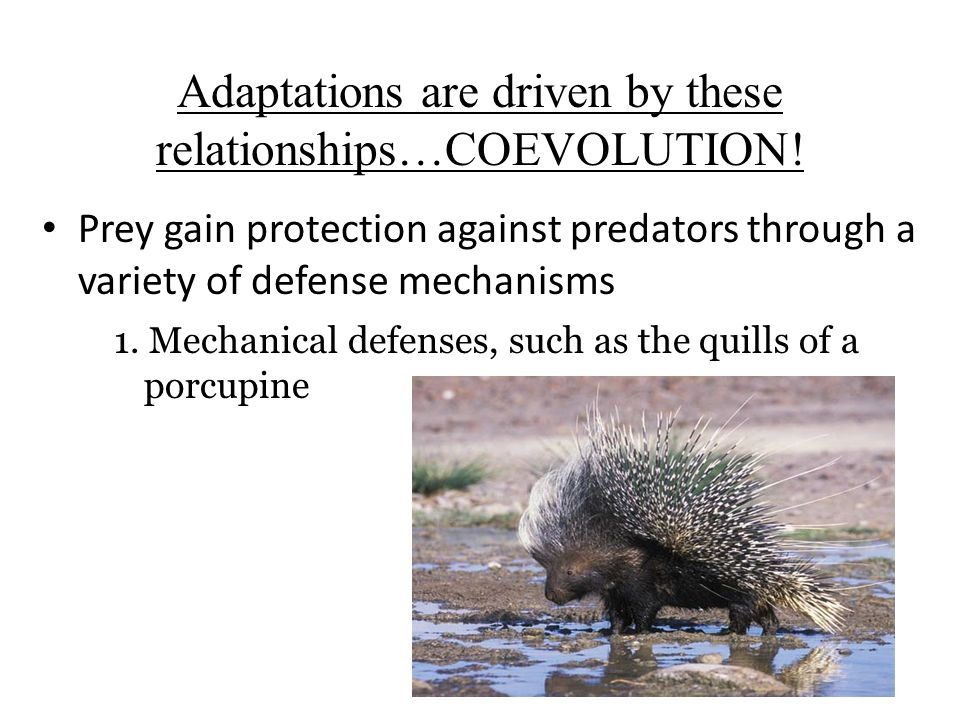 Adaptations are driven by these relationships…COEVOLUTION!