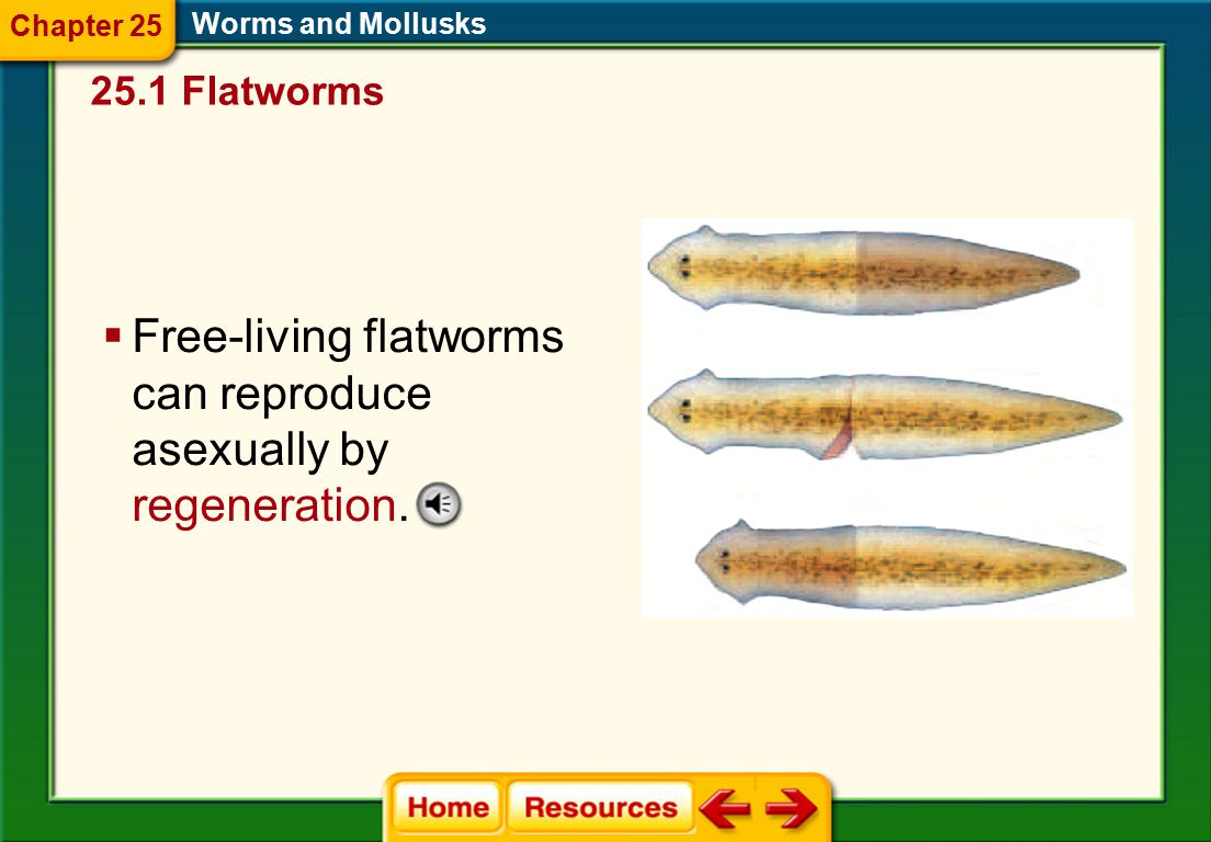 Free-living flatworms can reproduce asexually by regeneration.