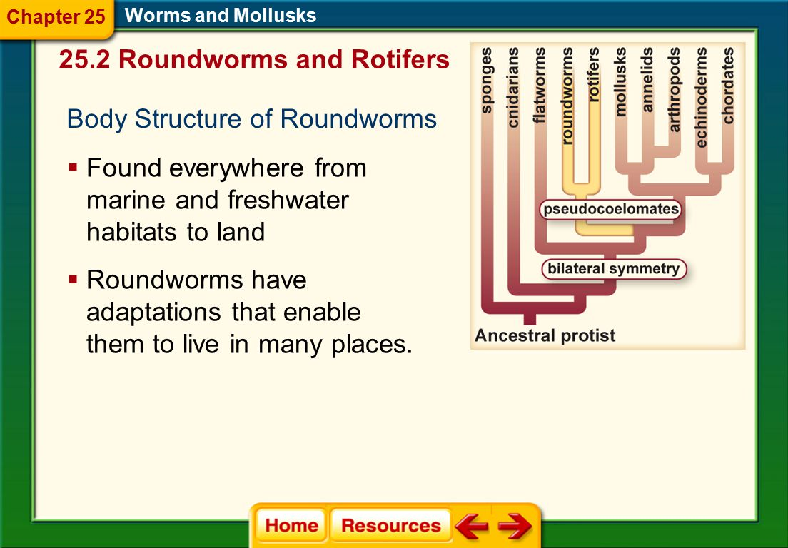 25.2 Roundworms and Rotifers