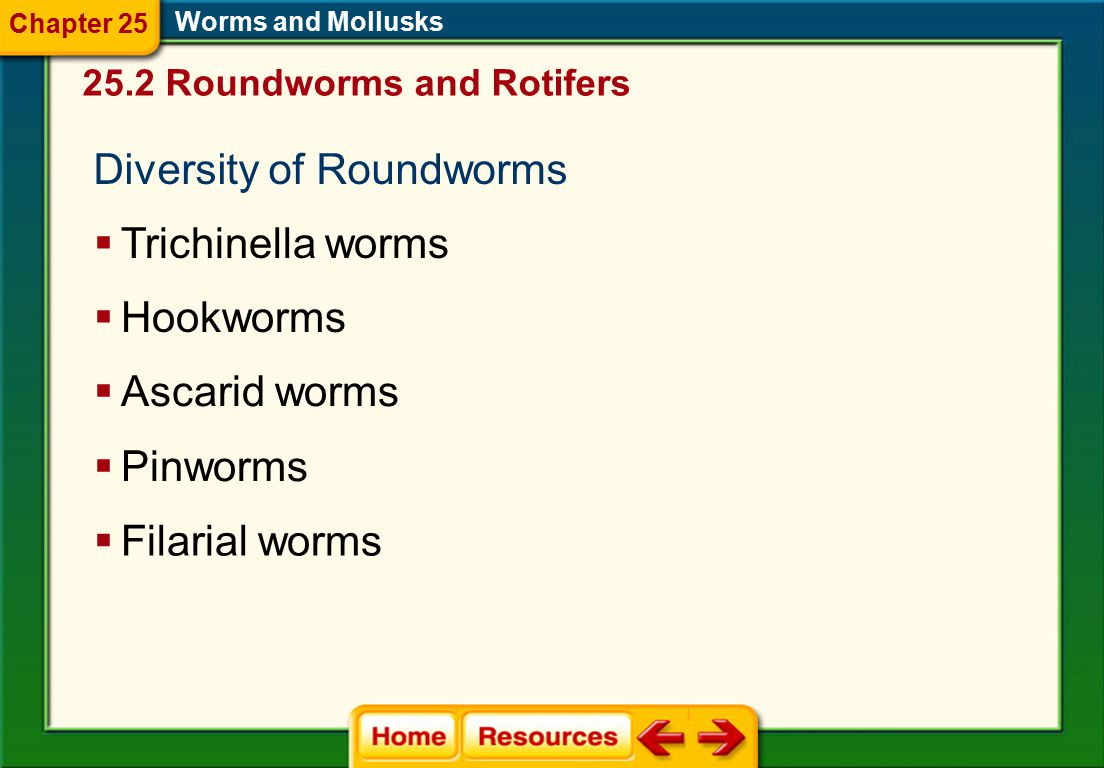 Diversity of Roundworms