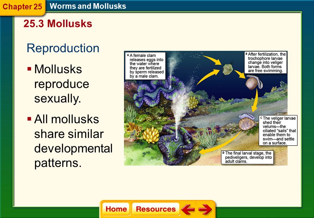 Mollusks reproduce sexually.