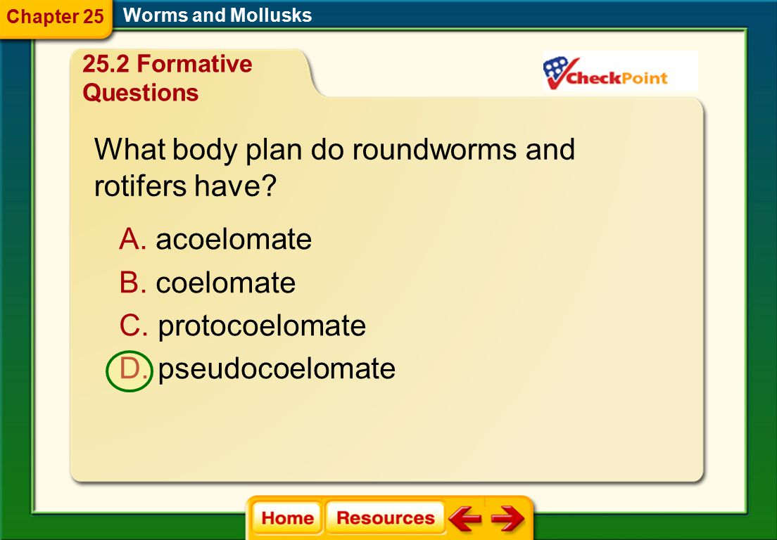What body plan do roundworms and rotifers have