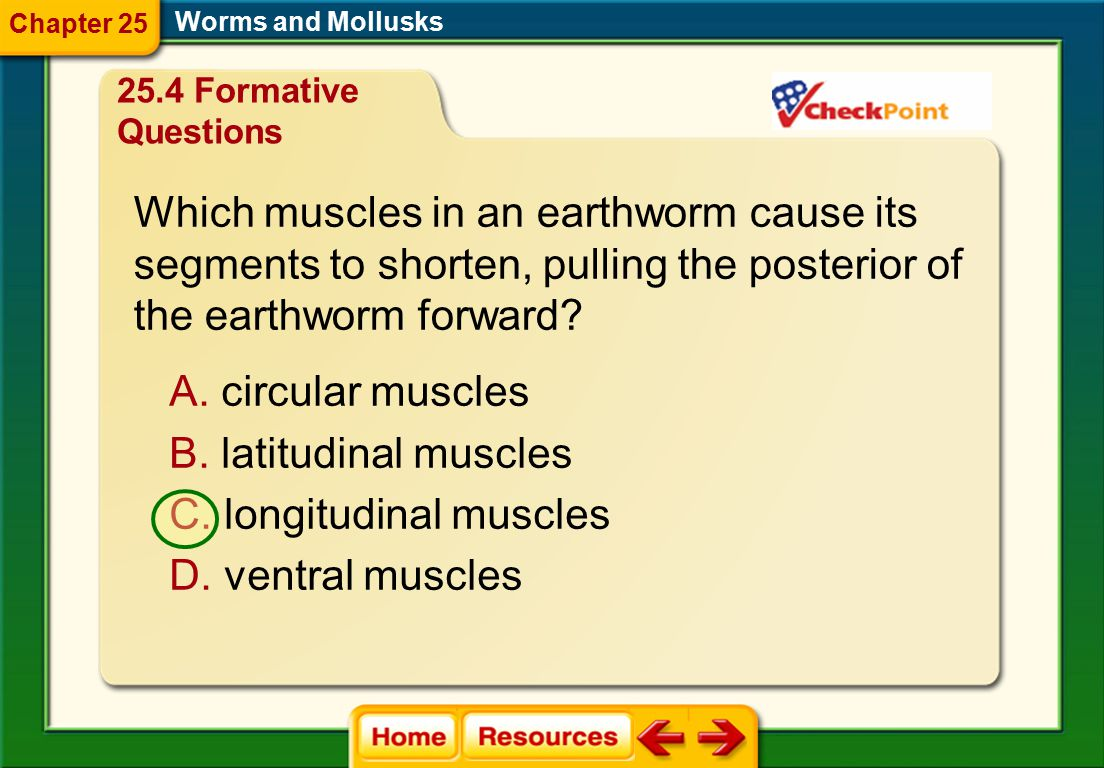 Which muscles in an earthworm cause its