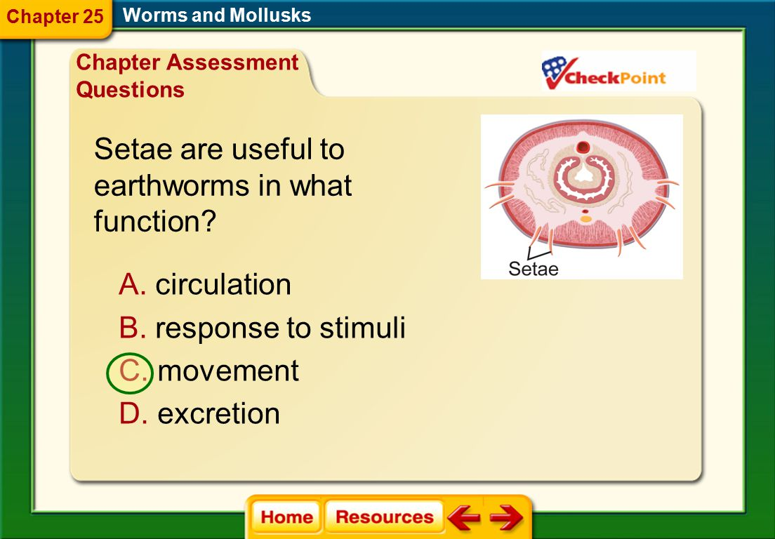 Setae are useful to earthworms in what function circulation