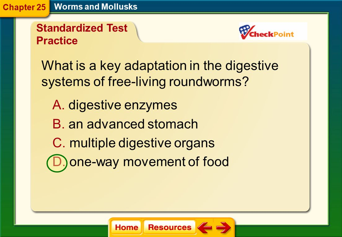 What is a key adaptation in the digestive