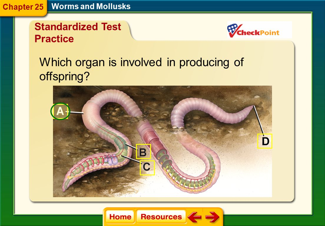 Which organ is involved in producing of offspring