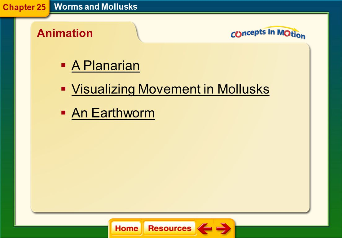 Visualizing Movement in Mollusks An Earthworm