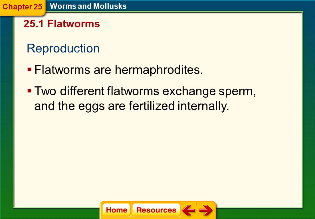 Flatworms are hermaphrodites.