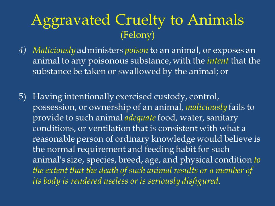 Aggravated Cruelty to Animals (Felony)
