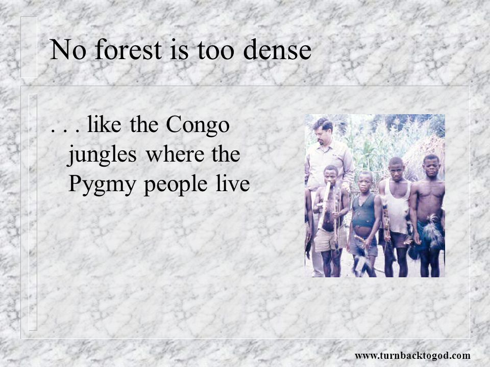 No forest is too dense . like the Congo jungles where the Pygmy people live.