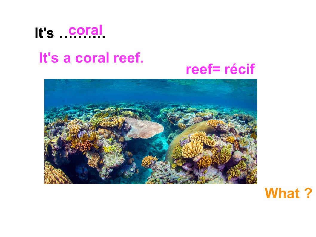coral It s ………. It s a coral reef. reef= récif What