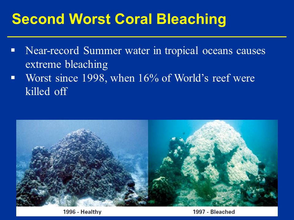 Second Worst Coral Bleaching