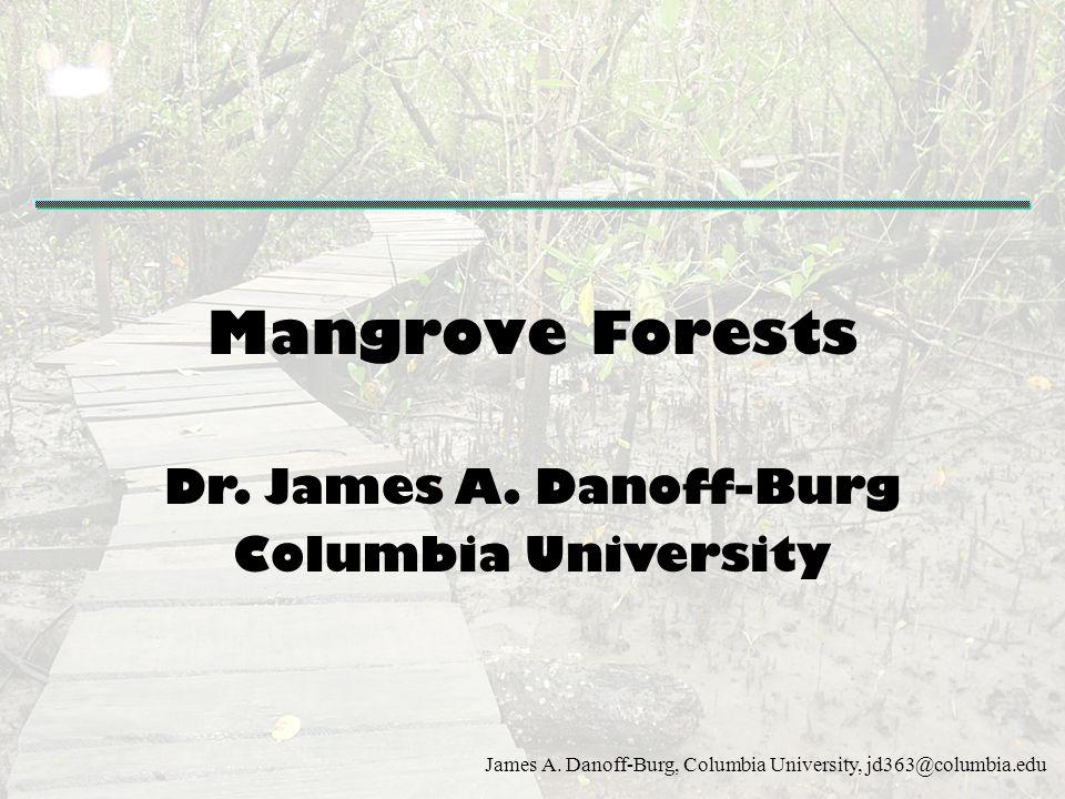 Mangrove Forests Dr. James A. Danoff-Burg Columbia University