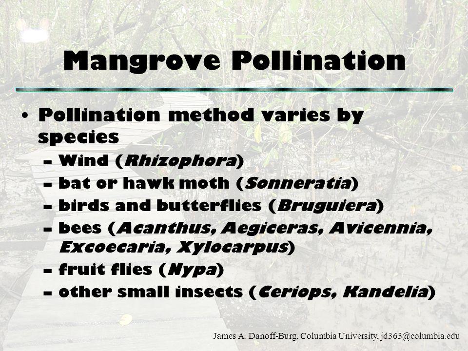 Mangrove Pollination Pollination method varies by species