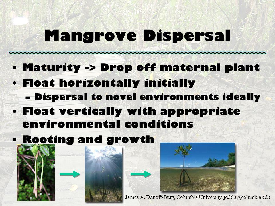 Mangrove Dispersal Maturity -> Drop off maternal plant