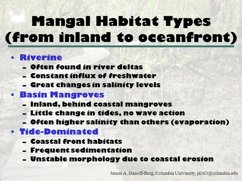 Mangal Habitat Types (from inland to oceanfront)