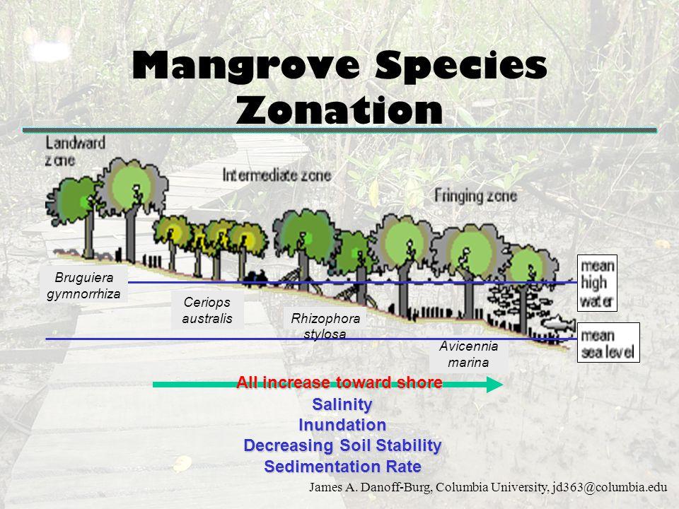 Mangrove Species Zonation