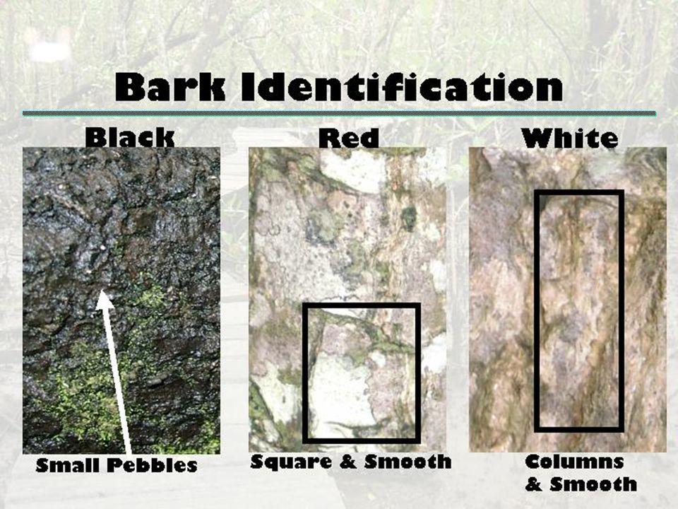 Bark Identification James A. Danoff-Burg, Columbia University, jd363@columbia.edu