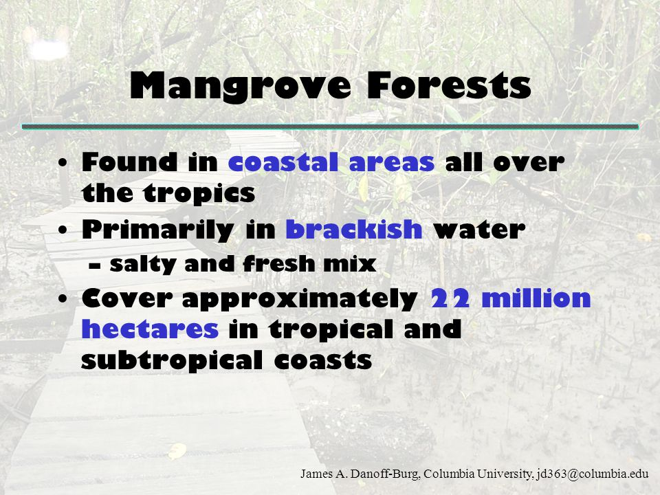 Mangrove Forests Found in coastal areas all over the tropics