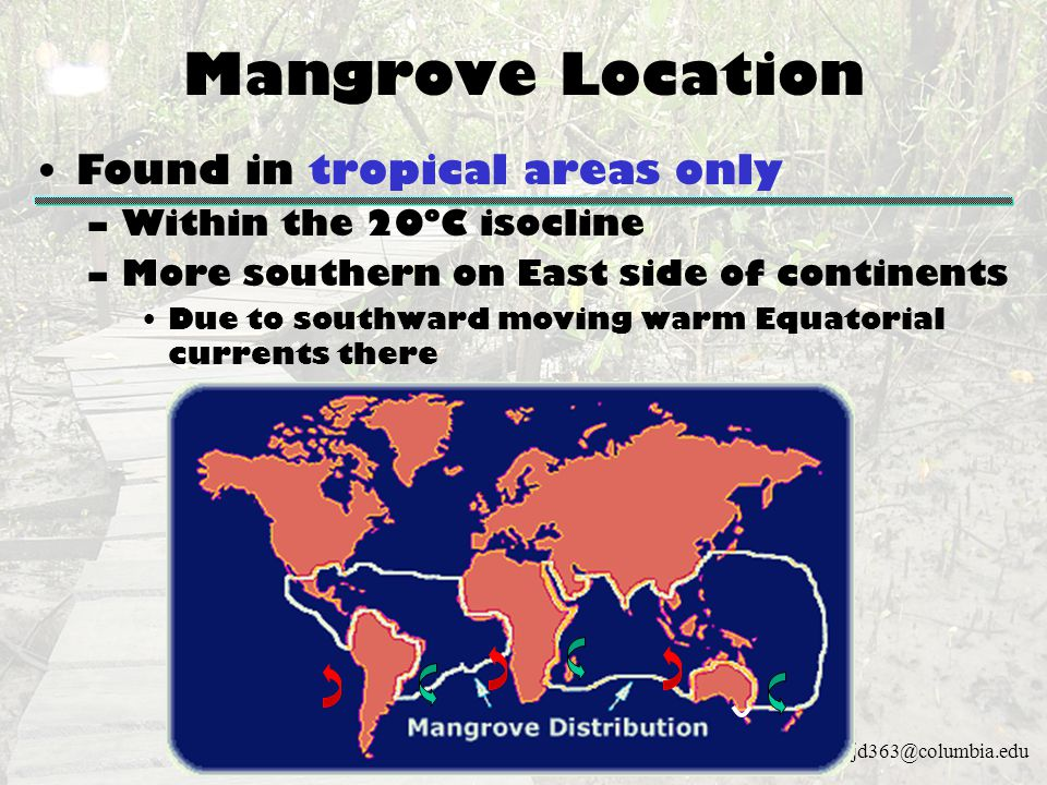 Mangrove Location Found in tropical areas only