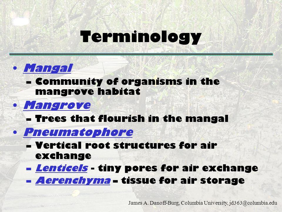 Terminology Mangal Mangrove Pneumatophore