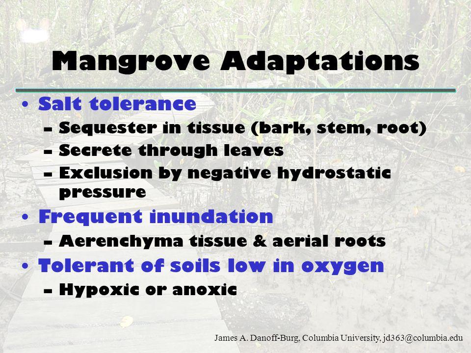 Mangrove Adaptations Salt tolerance Frequent inundation
