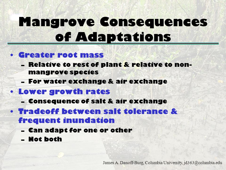 Mangrove Consequences of Adaptations