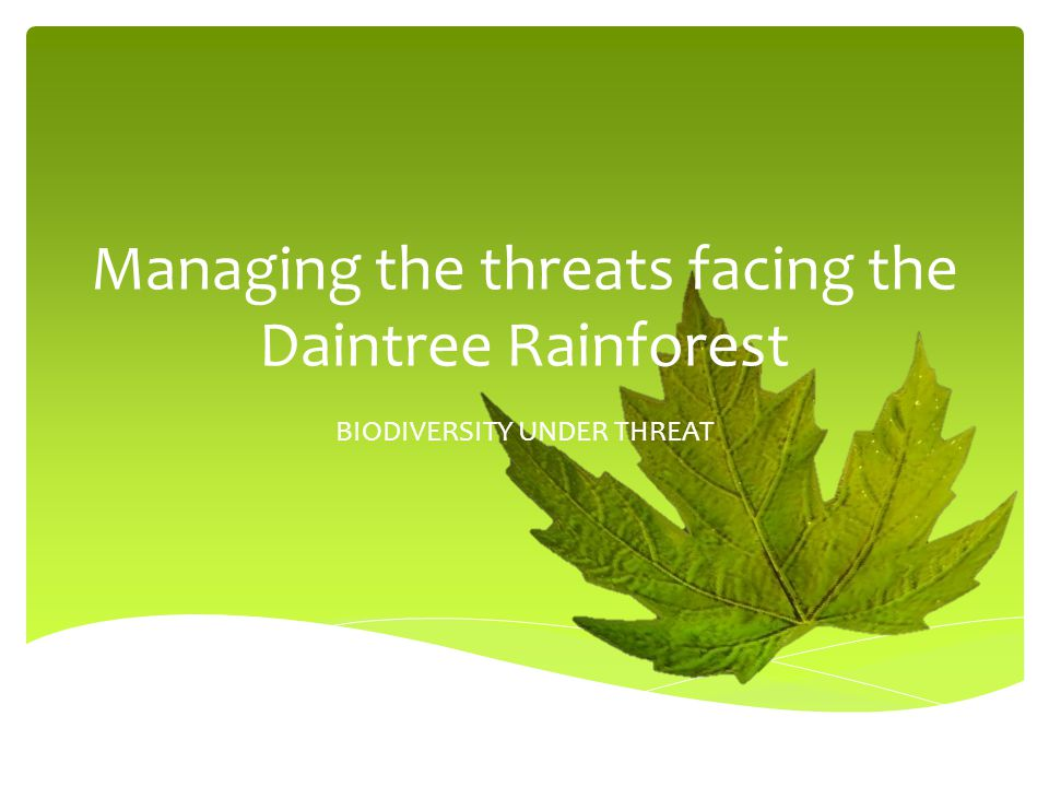 Managing the threats facing the Daintree Rainforest