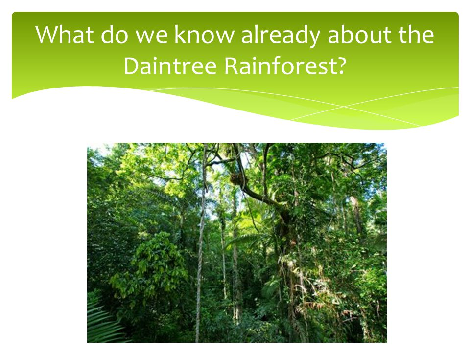 What do we know already about the Daintree Rainforest