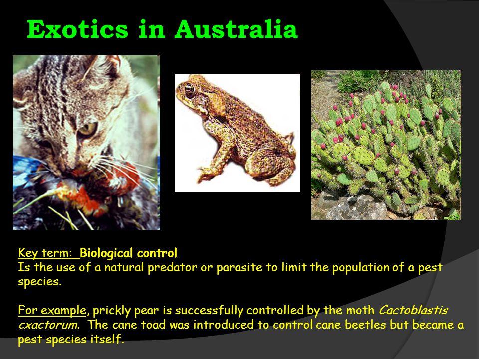 Exotics in Australia Key term: Biological control