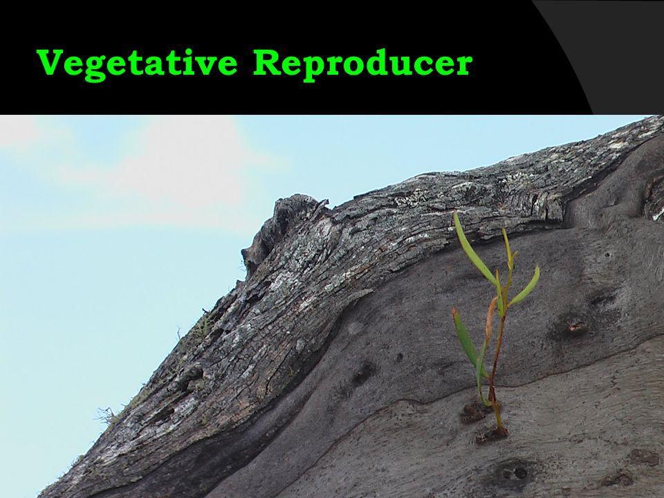 Vegetative Reproducer