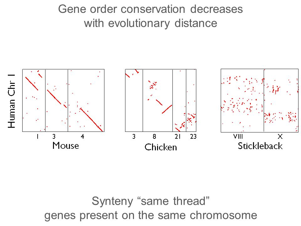 Gene order conservation decreases with evolutionary distance