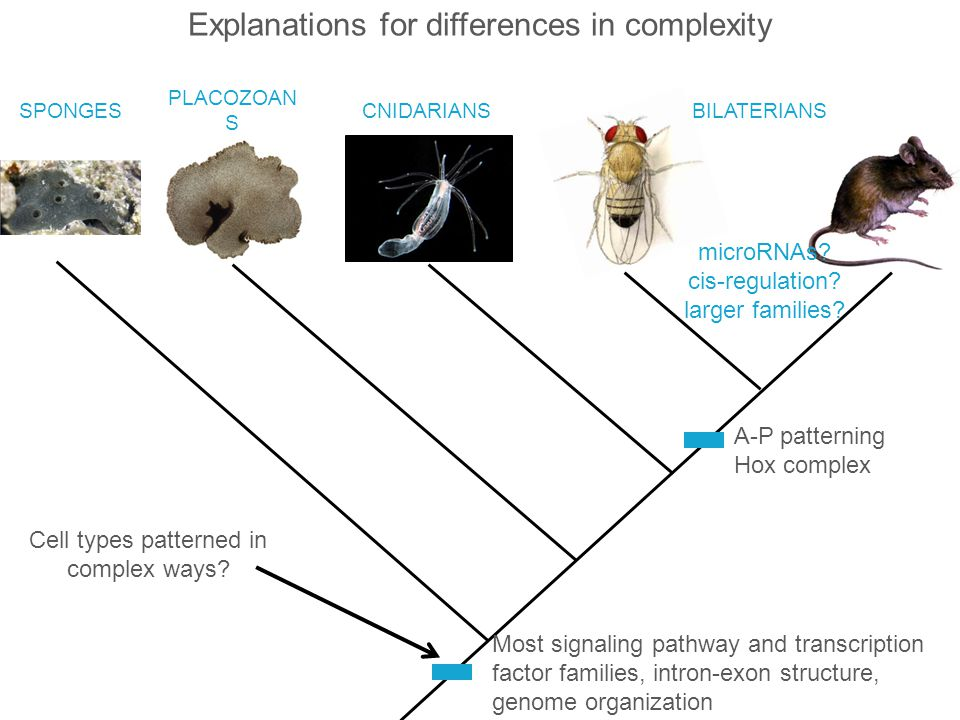 Explanations for differences in complexity
