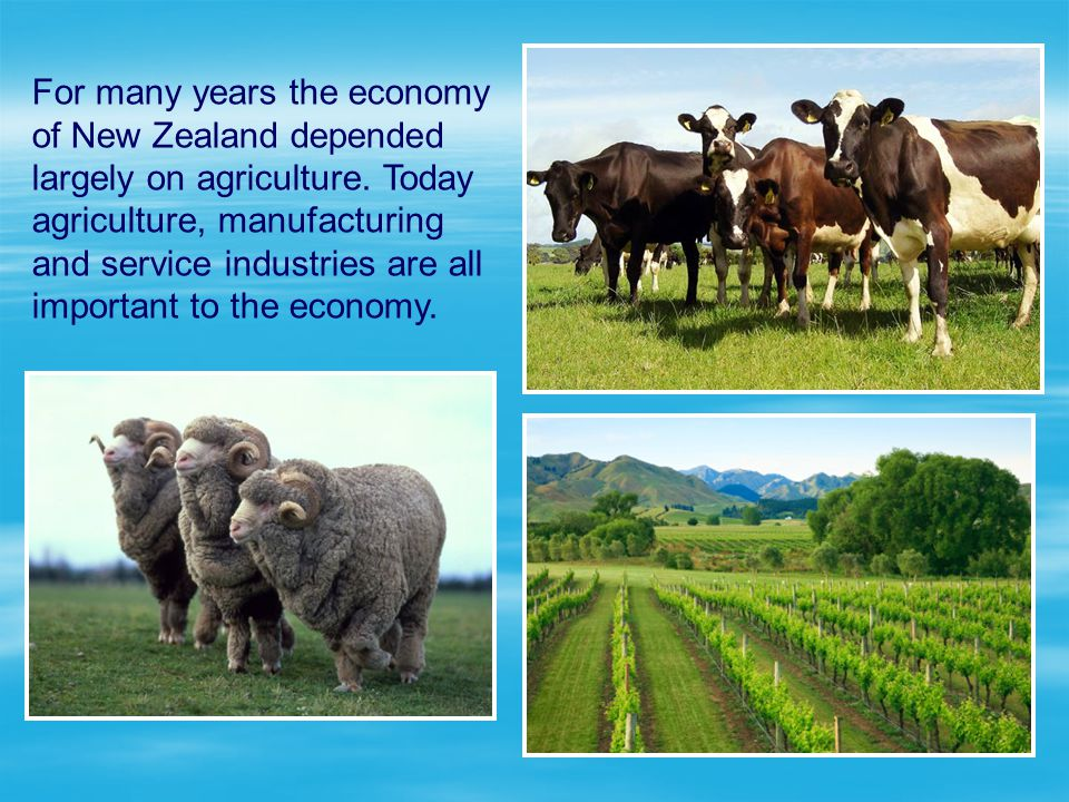 For many years the economy of New Zealand depended largely on agriculture.