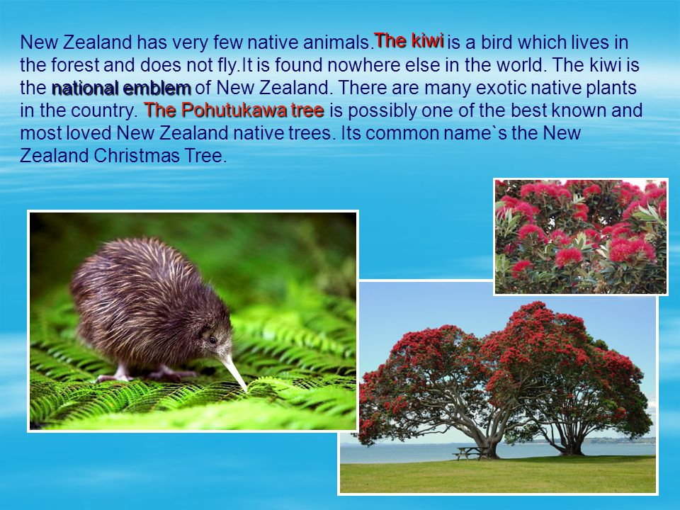 New Zealand has very few native animals