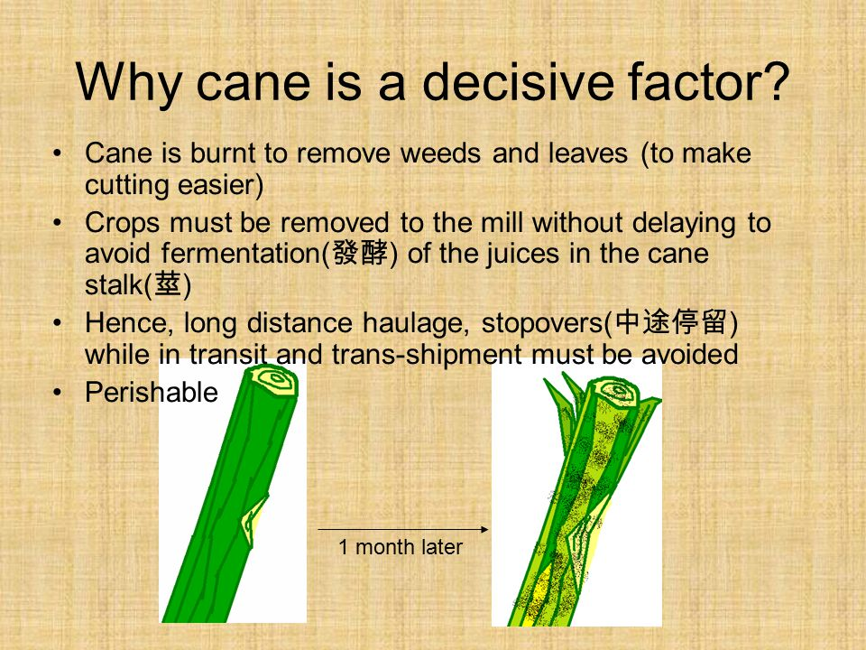 Why cane is a decisive factor