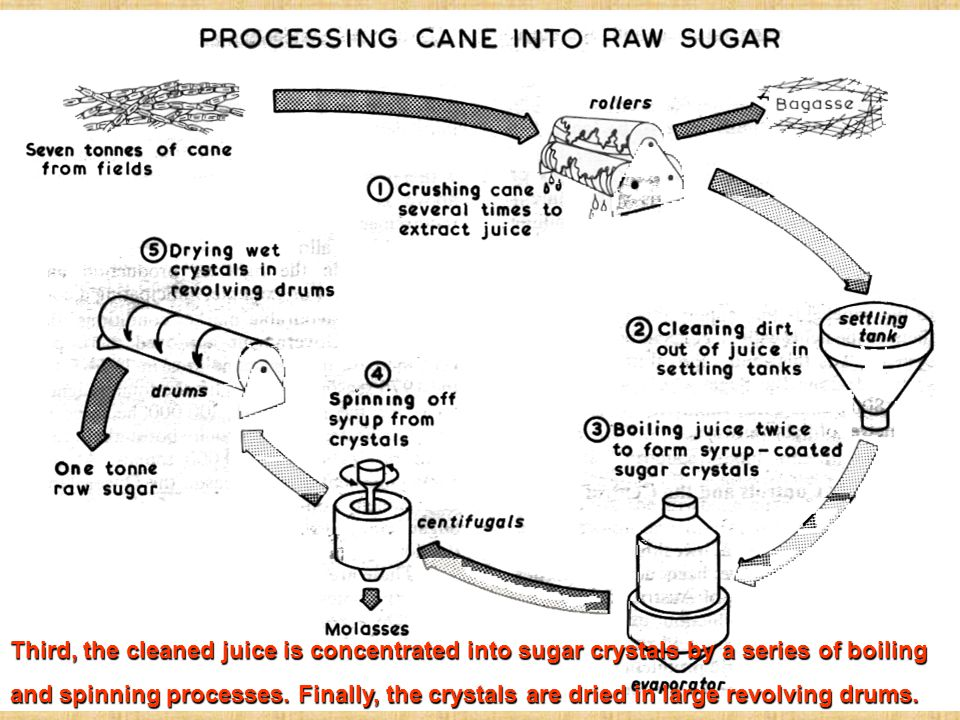 Third, the cleaned juice is concentrated into sugar crystals by a series of boiling