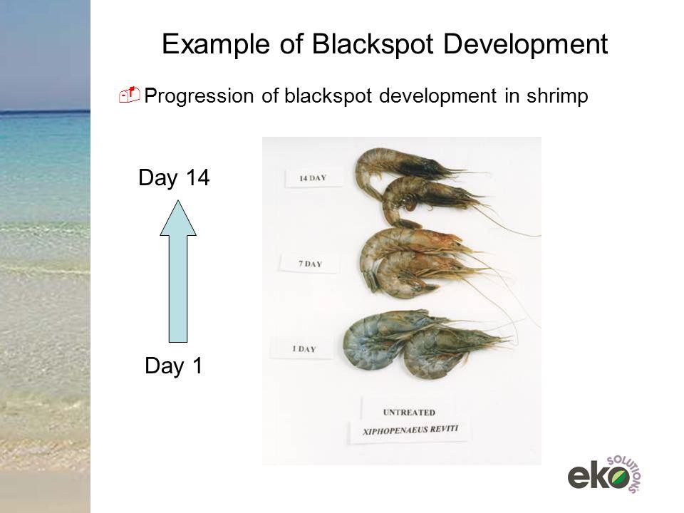Example of Blackspot Development