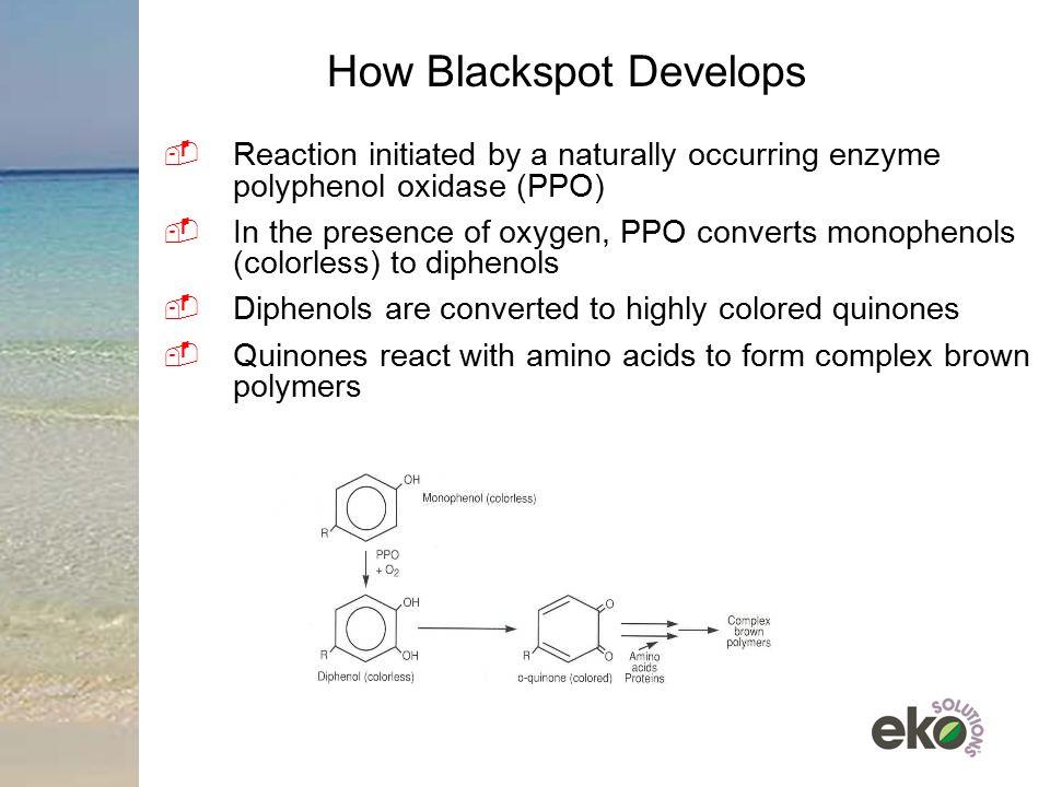 How Blackspot Develops